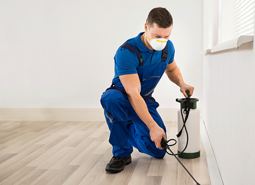 Pest Removal Ft. Lauderdale