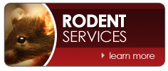 Rodent Services