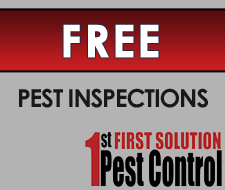 Free Pest Inspections - First Solution Pest Control